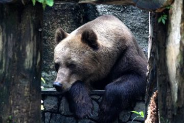 4 animales en peligro de extinción en Europa