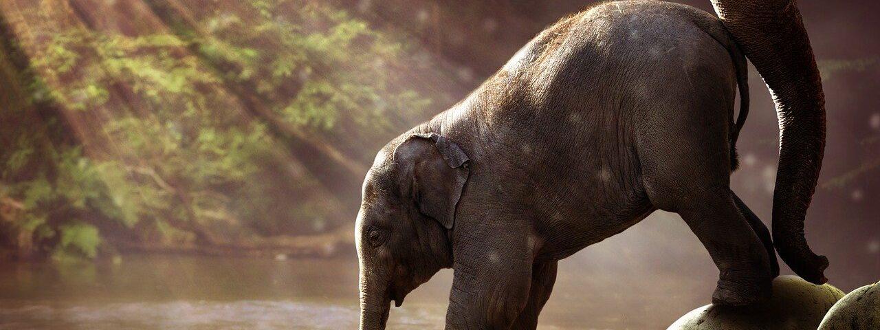 Animales Mamíferos (Elefante)